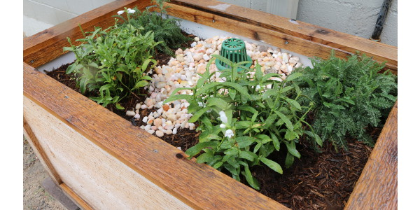 Downspout planter boxes contain plants that thrive in both wet and dry conditions. (Courtesy of Clemson University)