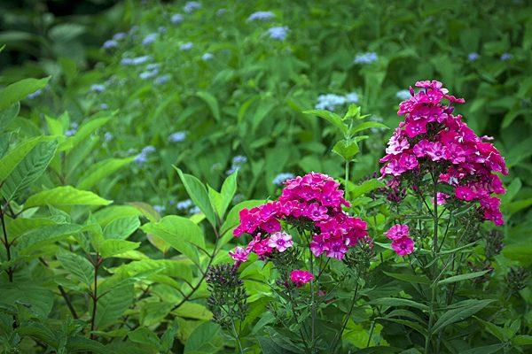 Master Gardener Plant Sale Set For May 6 Morning Ag Clips