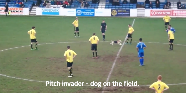 Dog takes over soccer game for 7 minutes