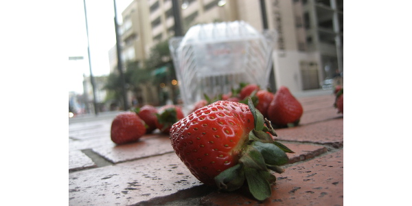 (By Rachel Glaves (Spilled strawberries) [CC BY-SA 2.0 (http://creativecommons.org/licenses/by-sa/2.0)], via Wikimedia Commons)