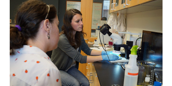Erin Levenson and Erin McDermott examine a queen bee in the Queen & Disease Clinic. (Courtesy of NC State Extension)