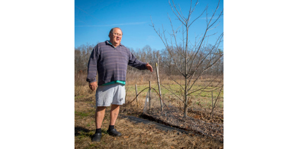 Dr. Joe James with a healthy chestnut tree at his Chestnut Return Farm in Oconee County. James is a driving force behind breeding root-rot resistant trees. (Image Credit: Ken Scar / Clemson University)