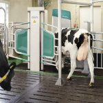 milking system