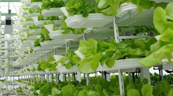 Wyo. growers take on vertical farming