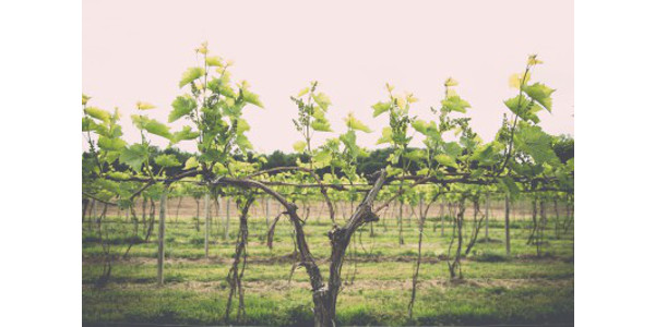 Monthly grape grower social