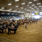 The Dakota Royalty Charity Draft Horse Show returns to the Swiftel Center in Brookings, SD Saturday, June 24 & Sunday, June 25, 2017. (Courtesy of Dakota Royal Charity Draft Horse Show via Facebook)