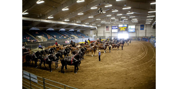 SD Draft Horse Show June 24 & 25