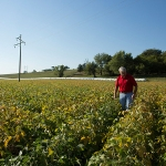 A farmer scouting for weeds in a soybean field. (United Soybean Board via Flickr)