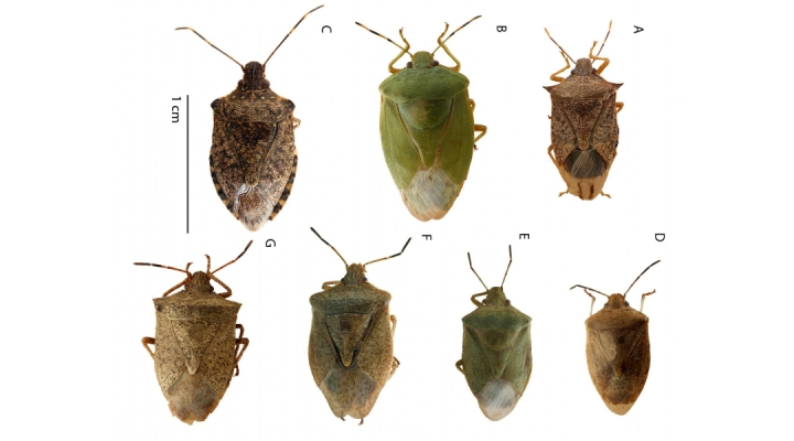 Free guide to handling stink bugs