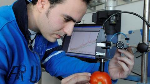 Detecting optimum ripeness in tomatoes