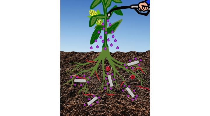New technology helps control nematodes