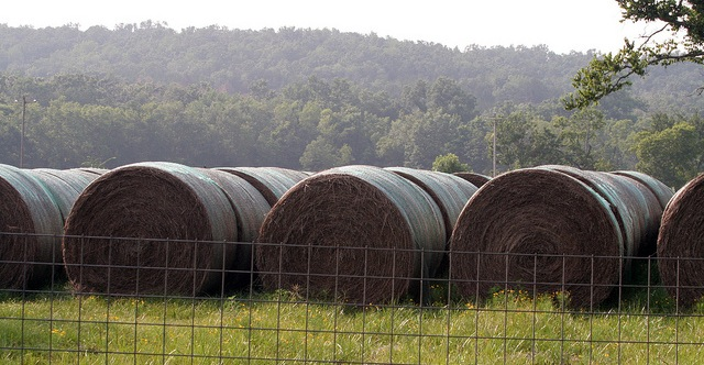 ODAFF warns against hay sales scammers