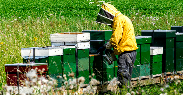 U.S. beekeepers lost 33% of bees in 2016-17