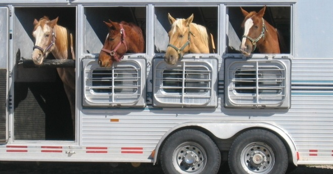 Keeping your horse healthy when traveling