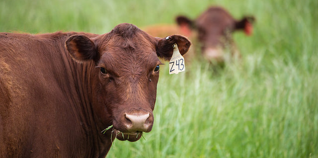 USCA on U.S. beef access to China