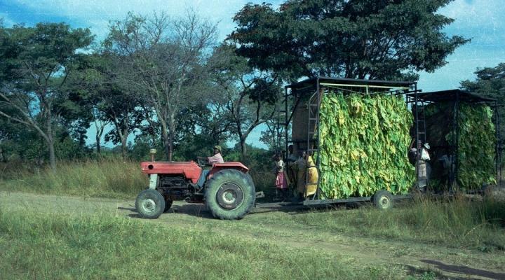 Zimbabwe farmers fail to access profits