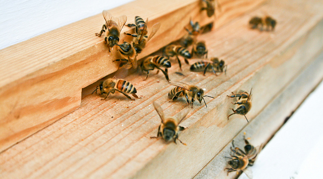 'Sting' leads to recovery of stolen bees