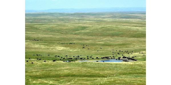grassland, rangeland