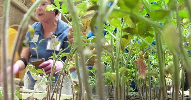 Otsego Master Gardener Plant Sale Morning Ag Clips