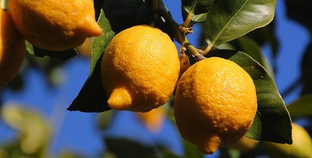 Argentine lemon rule disappoints