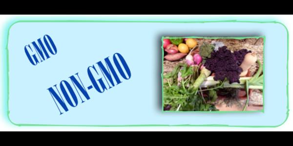 Global GMO acres increase amid concerns