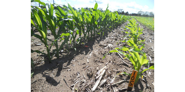Consider these real-world scenarios on the likelihood of nitrogen loss from fall-applied fertilizer. (Courtesy of University of Minnesota Extension)