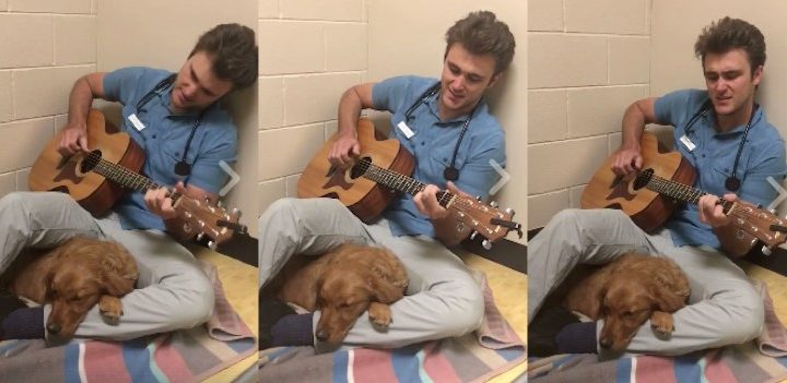 Vet soothes anxious dogs by singing to them