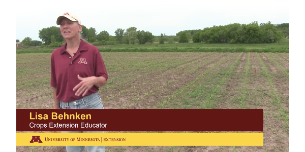 This video discusses some of what we are seeing with preemergence herbicide applications in our corn herbicide trials at Rochester, MN. (Screen shot)