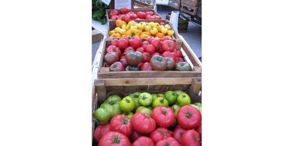 Tip top tasty tomatoes