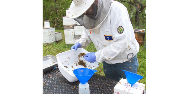 State apiary inspector Brad Cavin scoops a sample of bees from a Greenville County hive to be tested as part of the National Honey Bee Survey. (Image Credit: Clemson University)