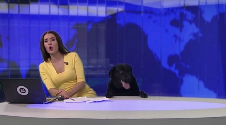 Dog helps reporter read the news