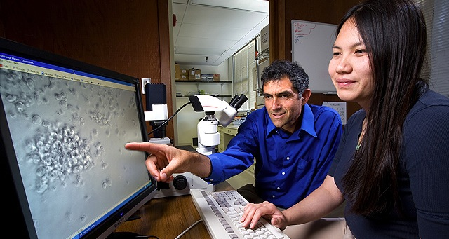 Faster, less costly test detects toxins