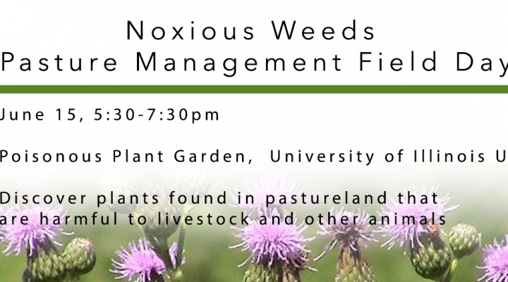 nox_weeds_slider