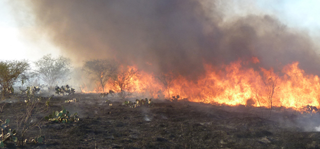 Prescribed burning lectureship