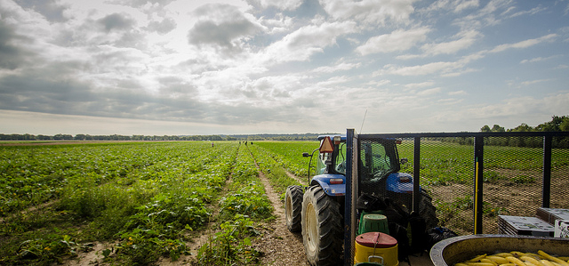 Immigrant farmworkers and SNAP