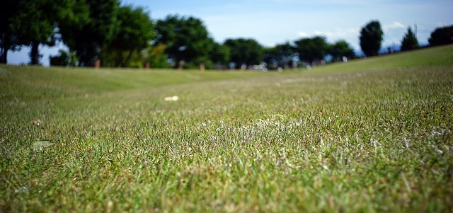 UMass Turf Research Field Day