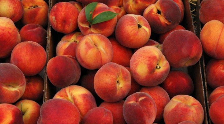 Bagging peaches protects from insects