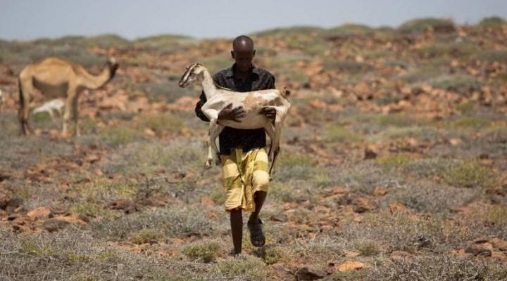 Milestone in famine-prevention campaign
