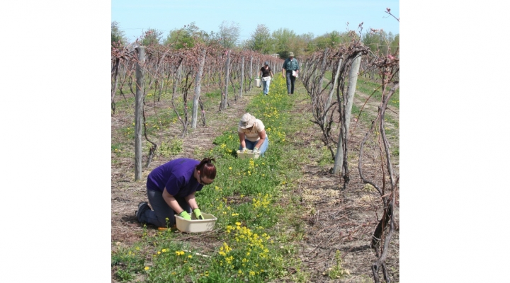 Events for grape growing community