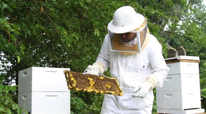 Beekeeping program changes homeless men