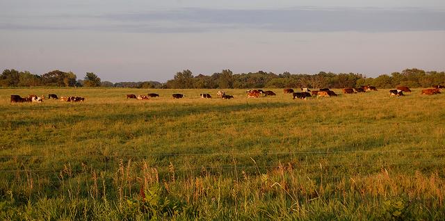 Pasture walk at Wolfe's Neck Farm