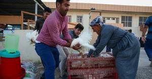 The key to restoring livelihoods in Iraq