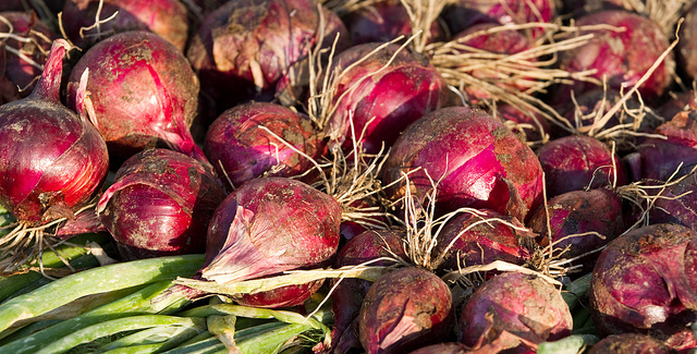 Red onions pack cancer-fighting punch