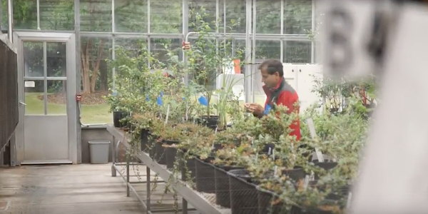 At NC State University, Hamid Ashrafi is busy breeding better blueberries. (Screenshot from video)