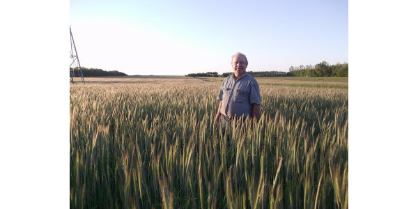 Tom Frantzen in his small grains crop. (Courtesy of Practical Farmers of Iowa)