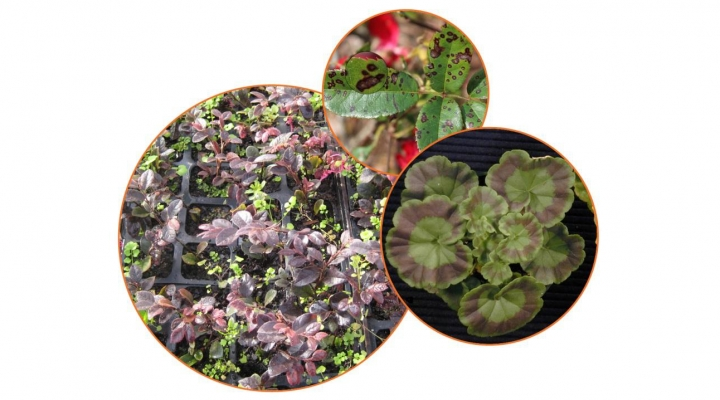 Greenhouse Training Online courses