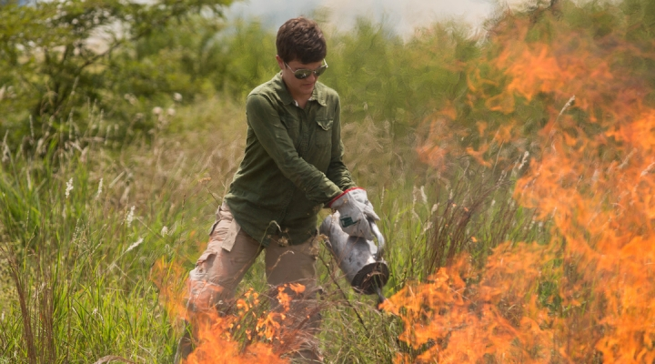prescribed burning offers many benefits morning ag clips