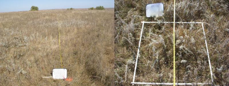 Figure 3.  Rangeland with adequate ground cover and residual plant heights.
