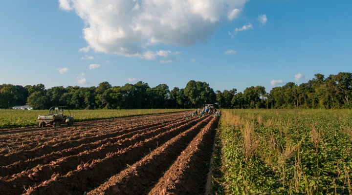NYFB defends farms from NYCLU lawsuit
