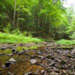 A stream runs through a Kentucky forest. (PHOTO: Matt Barton)